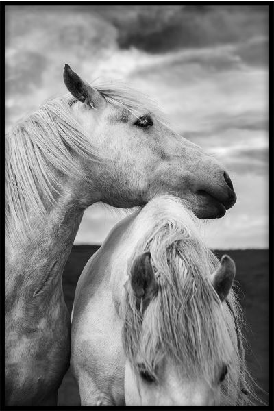 Horses in Scotland Portrait Poster