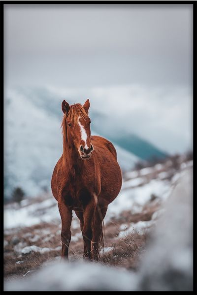 Horse on Mountain Poster