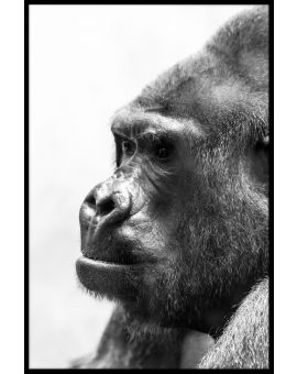 Gorilla Portrait Black & White Poster