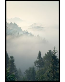 Morning Mist in Forest Poster