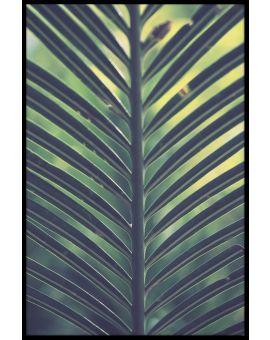 Palm Leaf Green Yellow Poster