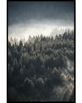 Misty Pine Forest Poster