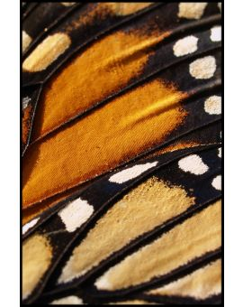 Butterfly Wing Poster