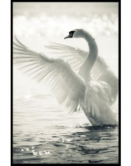 Graceful Swan Poster