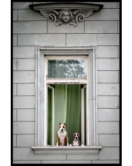 Window Dogs Poster