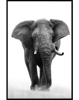 African Elephant N04 Poster