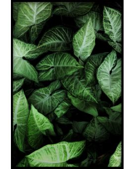 Green Leaves Peaceful Poster
