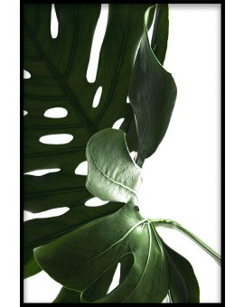 Monstera Close Up N03 Poster